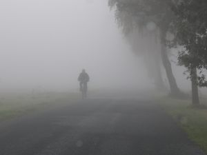 http://www.activityschoolbus.com/images/prek_theme_fog.jpg